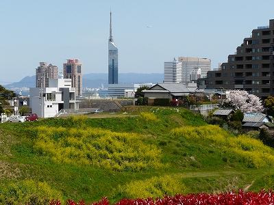 愛宕神社の山から百道浜の遠望も緑も美しい!